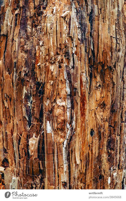 Künstlerisch abstrakte Oberfläche eines alten Holzstammes interessant warm gemütlich hölzern organisch Brennholz Wachstum Farbe Detailaufnahme Wand Holzplatte
