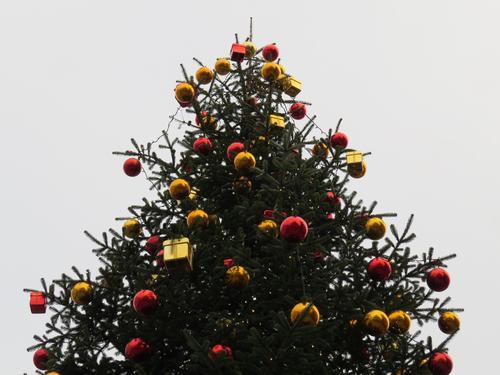 Rot-gold geschmückter Weihnachtsbaum Weihnachten & Advent Dekoration & Verzierung Weihnachtsdekoration Weihnachtsbaumdekoration Christbaumkugel Farbfoto