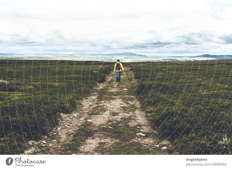 Männliche Person in Gelber Jacke und Rucksack wandert über eine weite Ebene / Fjell über einen steinigen Weg. Rechts und links vom Weg ist Heidelandschaft, in der Ferne Berge und tierfhängende Wolken.
