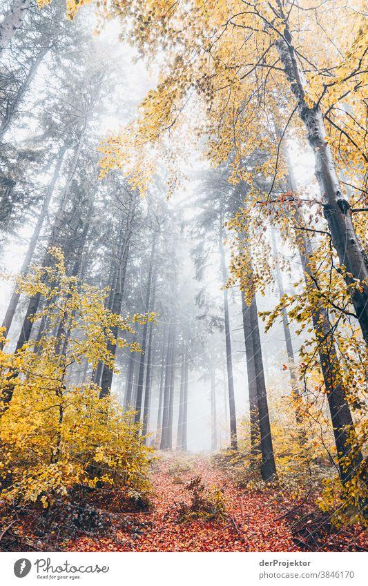 Nebelwald im Deister Wanderung Berge u. Gebirge deister Umwelt Natur Ausflug Landschaft Ferne wandern Sightseeing Pflanze Herbst Akzeptanz Wald Baum Vertrauen