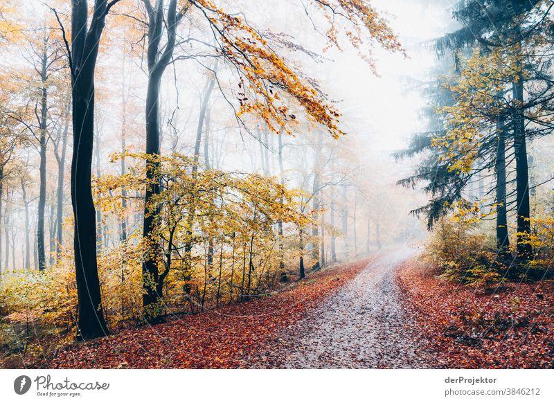 Weg im Nebelwald im Deister Wanderung Berge u. Gebirge deister Umwelt Natur Ausflug Landschaft Ferne wandern Sightseeing Pflanze Herbst Akzeptanz Wald Baum