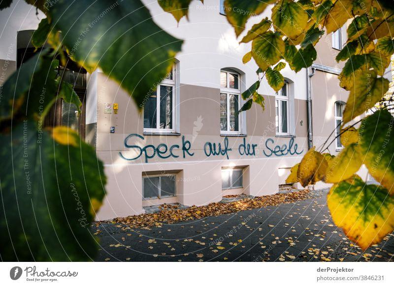 Speck auf der Seele: Graffiti in Berlin Ausflug Natur Umwelt Sightseeing Pflanze Herbst Schönes Wetter Akzeptanz Herbstlaub Herbstfärbung herbstlich