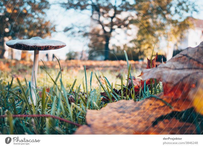 Kleinstsehenswürdigkeit in Berlin: Pilz im Herbst Ausflug Natur Umwelt Sightseeing Pflanze Schönes Wetter Akzeptanz Herbstlaub Herbstfärbung herbstlich