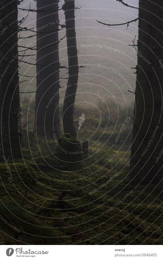 Restlichtverwertung im Nebel am Waldesrand mit Baumstrunk Waldboden Moos Moosteppich natürlich düster beängstigend düster horror mystisch Natur Herbst Pflanze