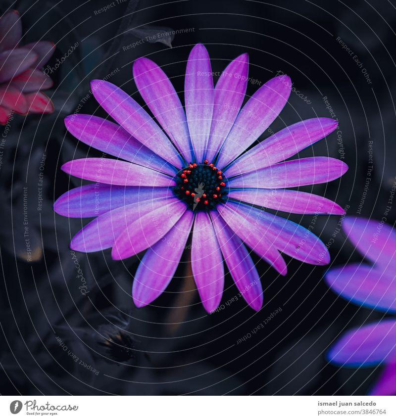 rosa Blütenpflanze im Garten in der Herbstsaison, Herbstmodus Blume purpur Blütenblätter Pflanze geblümt Flora Natur natürlich dekorativ Dekoration & Verzierung