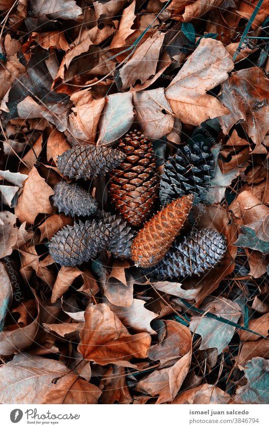 braune Blätter und Kiefernzapfen auf dem Boden in der Herbstsaison Blatt trocknen Natur natürlich texturiert im Freien Hintergrund fallen Winter Weihnachten