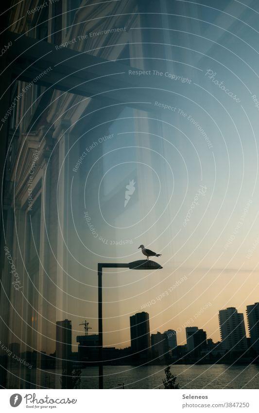 Abendstimmung Stadt Abenddämmerung Dämmerung Skyline Laterne Möwe Sonnenlicht natürliches Licht Himmel Sonnenuntergang Menschenleer Spiegelung