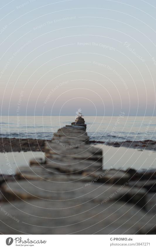 Möwe auf Buhnen in Ostsee vor Abendhimmel Meer friedlich stille Horizont blau Tiefenschärfe