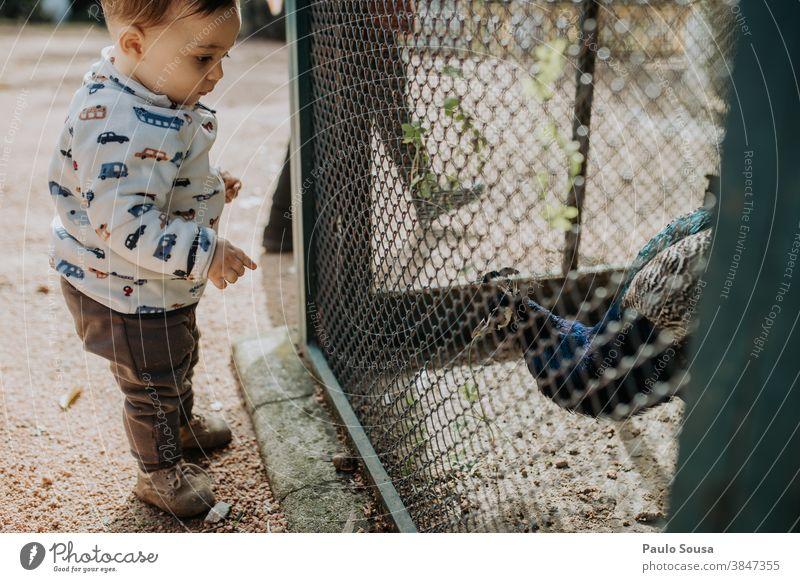 Kleinkind schaut Pfau an 0-09 Jahre Lernen und Wissen authentisch Herbst lässig Kaukasier Kind Farbe Neugier Tag Bildung Genuss Umwelt erkunden Familie Glück