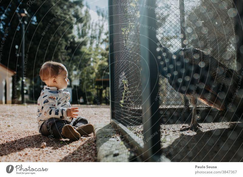Kleinkind schaut Pfau an 0-09 Jahre Lernen und Wissen anhänglich authentisch Herbst lässig Kaukasier Kind Farbe Neugier Tag Genuss Umwelt erkunden Familie Glück