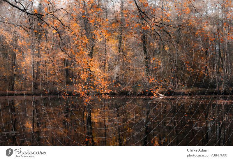 Herbst am See Blatt Baum Natur Ast Außenaufnahme rot Teich Spiegelung Wasser Herbstfarben herbstlich Herbstwald Herbstfärbung Menschenleer Umwelt Wald