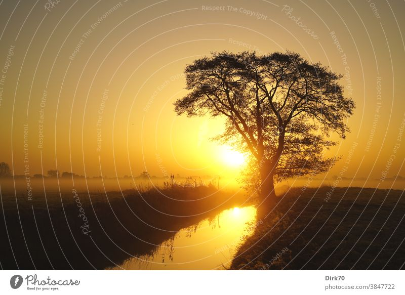 Sonnenaufgang mit Baum, Bach und nebliger Wiese Sonnenaufgang - Morgendämmerung Landschaft Herbst Silhouette Graben Feuchtwiese Gras Grasland Schilf Nebel