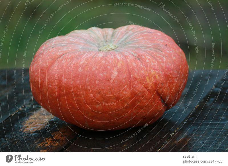 Ein orangefarbener Kürbis liegt an einem Herbsttag auf einem Holztisch im Freien auf grünem Grund.  Rustikaler Hintergrund für Thanksgiving Day und Halloween. Stilleben mit orangefarbenem Kürbis.
