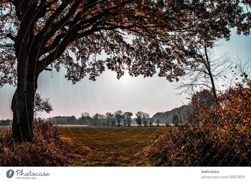 herbststille Herbstlandschaft Blätter Herbstwetter fallende Blätter Sonnenlicht Kontrast Licht Außenaufnahme Farbfoto schön fantastisch Wald Sträucher Blatt
