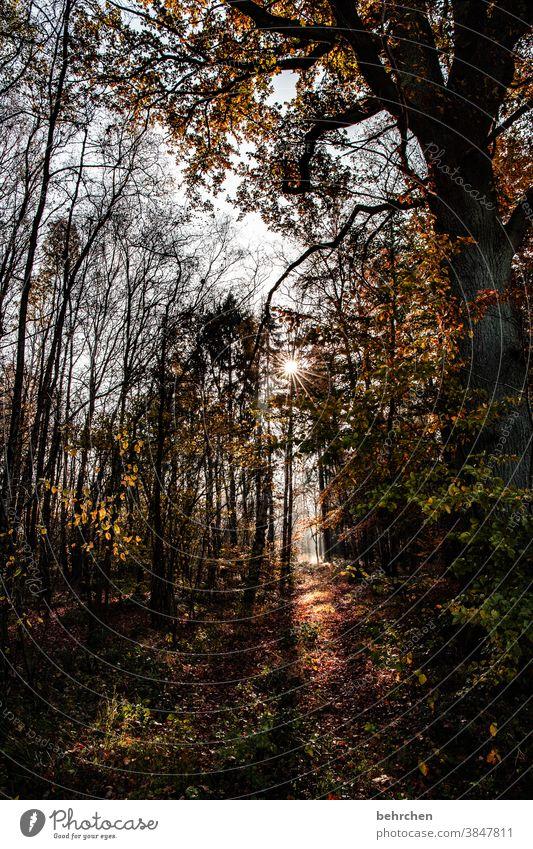 am ende ist licht Idylle herbstspaziergang Herbstfärbung herbstlich Herbststimmung Jahreszeiten Herbstlaub ruhig Schönes Wetter Wege & Pfade Menschenleer Umwelt