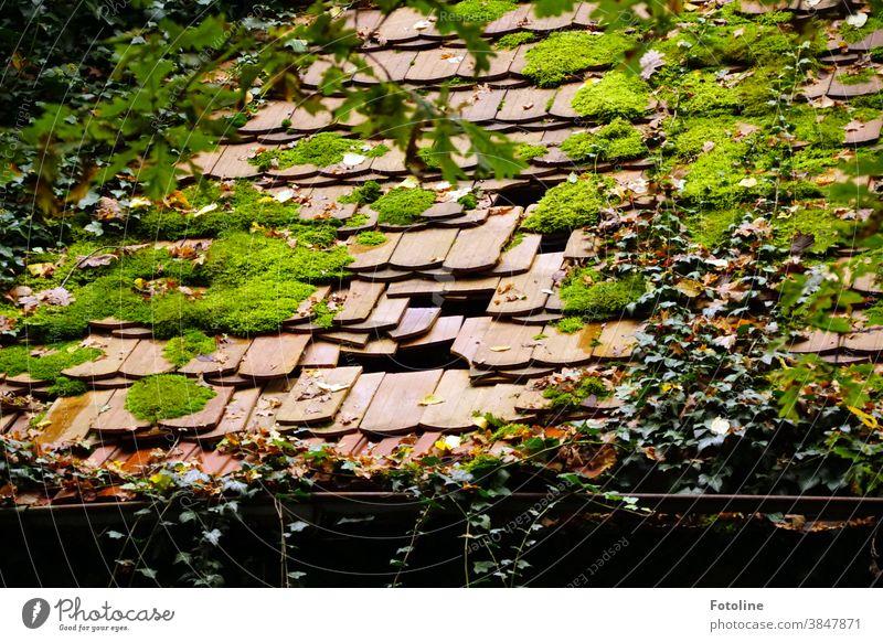 Grün, grün, grün sind alle meine Fraben, grün, grün, grün ist alles was ich hab... - oder das Dach eines Lost Place, auf dem schon Dachziegel fehlen und die Natur ihren Raum zurück fordert.