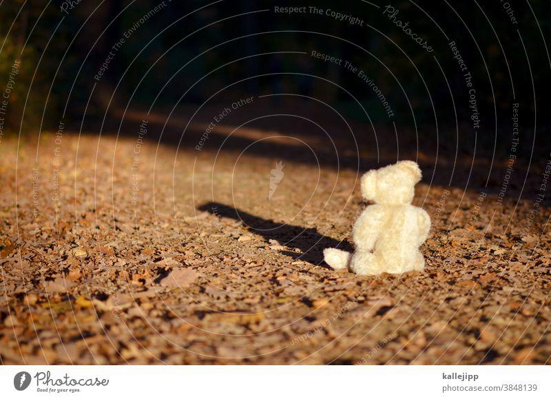 the winner takes it all Teddybär Bär Spielzeug braun Stofftiere Kindheit sitzen Tag Farbfoto Einsamkeit Spielen Natur Baum chillen schlafen bärlin Tier