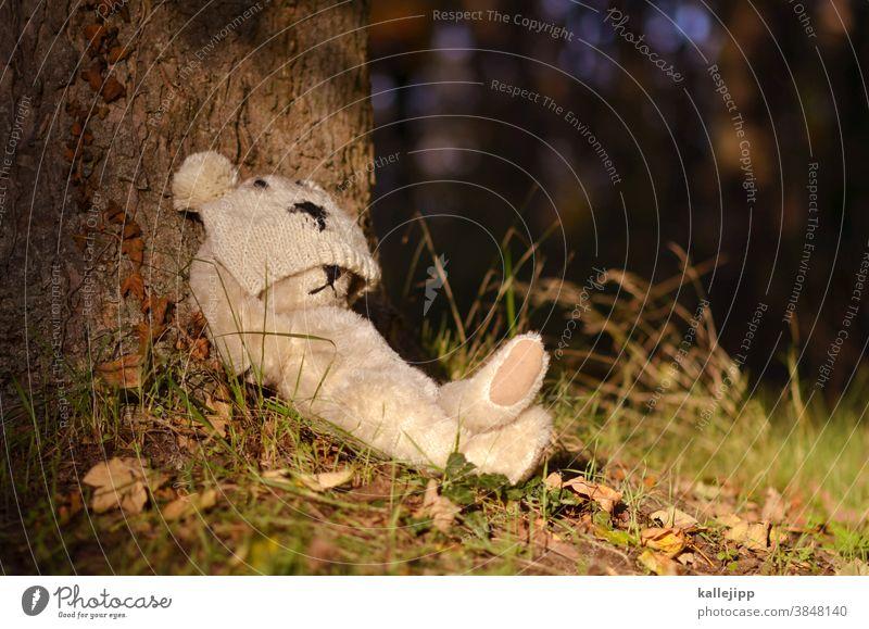 chill mal donald Teddybär Bär Spielzeug braun Stofftiere Kindheit sitzen Tag Farbfoto Einsamkeit Spielen Natur Baum chillen schlafen bärlin Tier winterschlaf