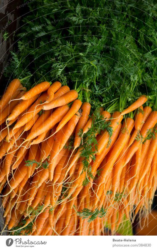 Frischer geht's nicht / Thementag: Backwahn_Esswahn Natur grün Pflanze Sommer gelb Essen Gesundheit liegen Lebensmittel orange Zufriedenheit frisch Ernährung kaufen Gemüse Bioprodukte