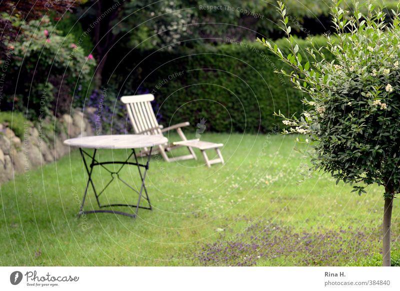 Warten Pflanze Sommer Baum Hecke Garten Wiese Erholung warten grün Außenaufnahme Gartenmöbel Holztisch Liegestuhl Farbfoto Menschenleer Textfreiraum unten