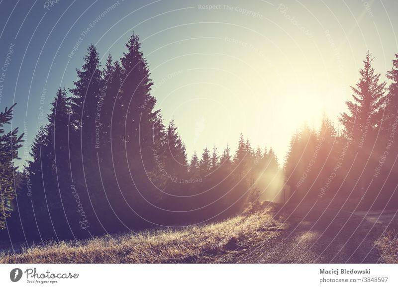Wald im Isergebirge bei Sonnenaufgang, Polen. Isera Berge Natur Landschaft Weg Straße Sonnenuntergang malerisch schön getönt gefiltert purpur reisen Himmel Baum