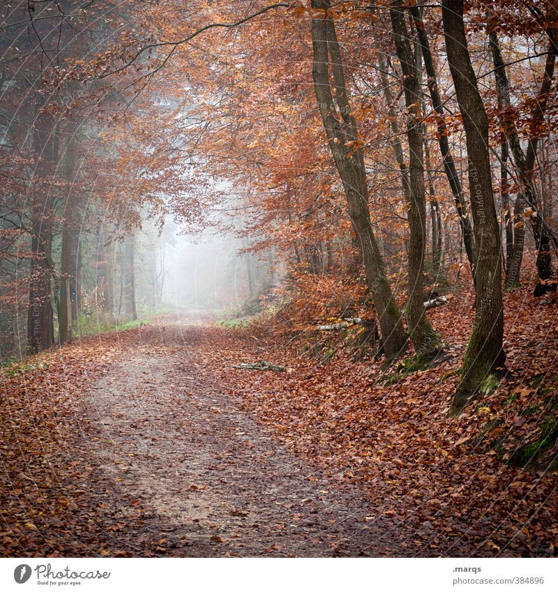 Im Herbst Natur Baum Landschaft Wald kalt Umwelt Leben Wege & Pfade Stimmung Nebel Ausflug Zukunft Abenteuer Vergänglichkeit Wandel & Veränderung