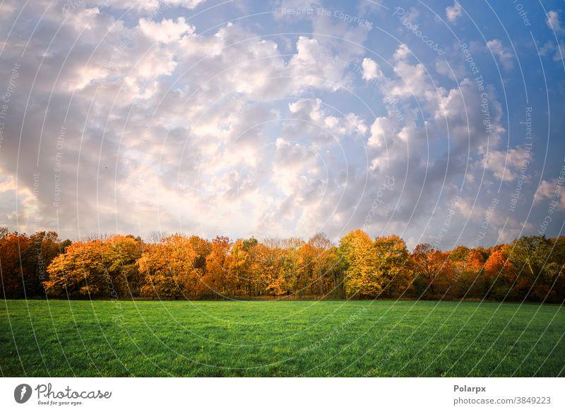 Bäume in einer Reihe in Herbstfarben Panorama natürlich frisch Sonne Cloud Ansicht Ast Holz niemand Pflanze im Freien malerisch Farbe Sommer Park Land blau