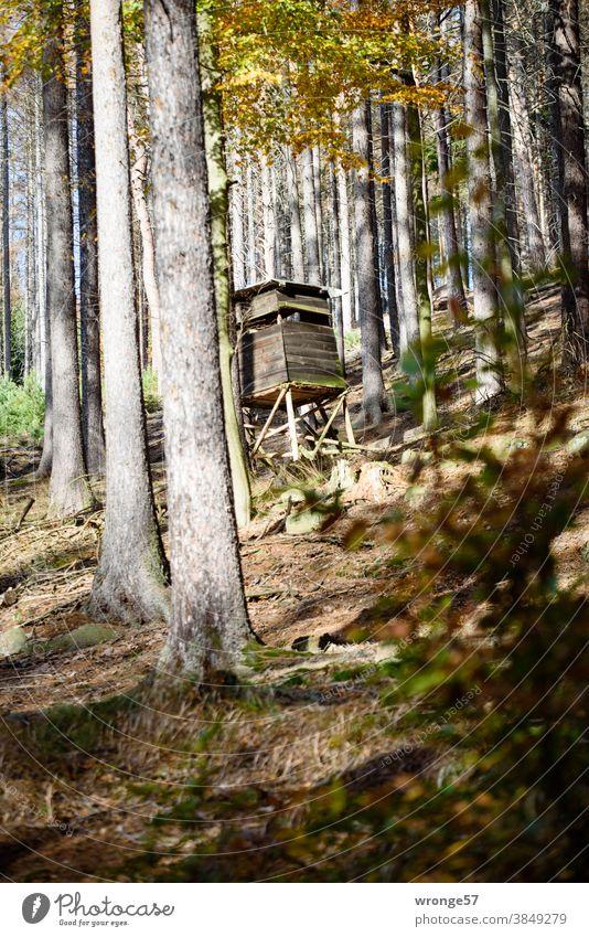 Ein Hochstand für Jäger steht zwischen Fichten und Laubbäumen im herbstlichen Bergwald Hochsitz Jagd Jägerhochsitz Wald Herbstwald Mischwald Nadelbäume