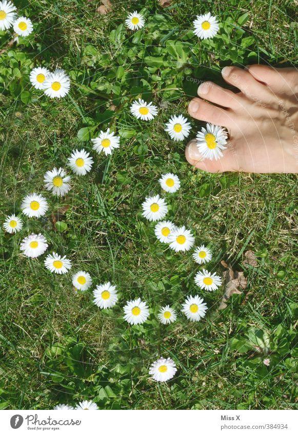 Liebe mit Füßen treten Körperpflege Pediküre Mensch Fuß Blume Wiese Blühend Duft Gefühle Stimmung Frühlingsgefühle Verliebtheit Romantik Gänseblümchen Herz