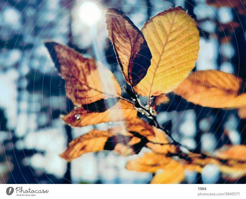 Goldenes Blatt Sonnenlicht Herbst golden Blätter blau orange Natur gelb Licht schön Umwelt Wald im Freien