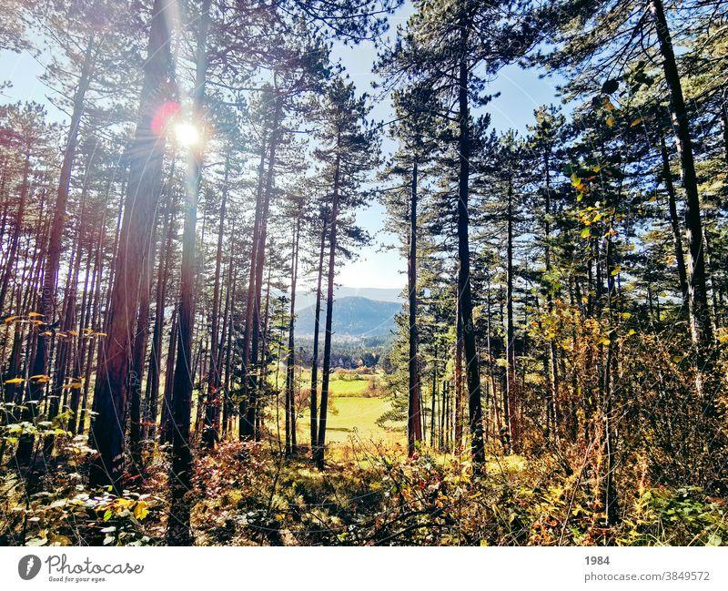 Ausblick ausblick Ferne Natur Wiese Wald Bäume Farbfoto Landschaft Menschenleer Sonnenlicht Außenaufnahme