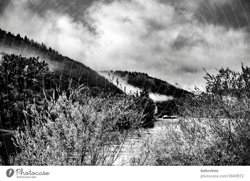 nebelwald melancholisch melancholie beeindruckend dunkel dramatisch Ferien & Urlaub & Reisen Wald Schwarzweißfoto wandern Natur Außenaufnahme Umwelt Wolken