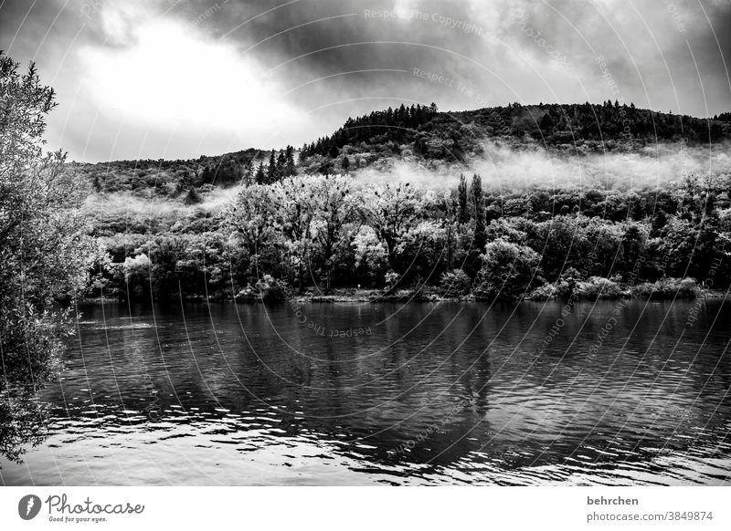 wolkenherz Jahreszeiten herbstlich Herbst Regen Hunsrück Rheinland-Pfalz Flussufer Mosel (Weinbaugebiet) Moseltal Ruhe Idylle Abenteuer Landschaft