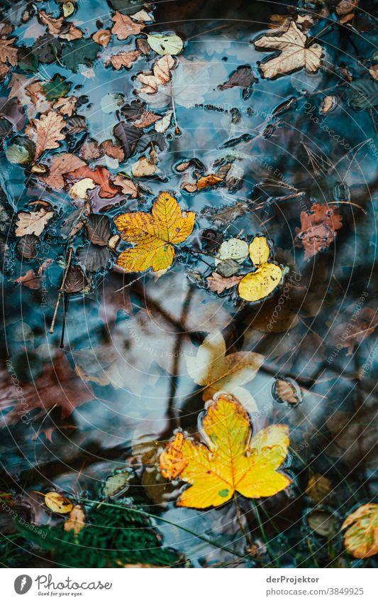 Blätter im See in Brandenburg Landschaft Ausflug Natur Umwelt wandern Sightseeing Pflanze Herbst Schönes Wetter Baum Wald Akzeptanz Vertrauen Glaube Herbstlaub