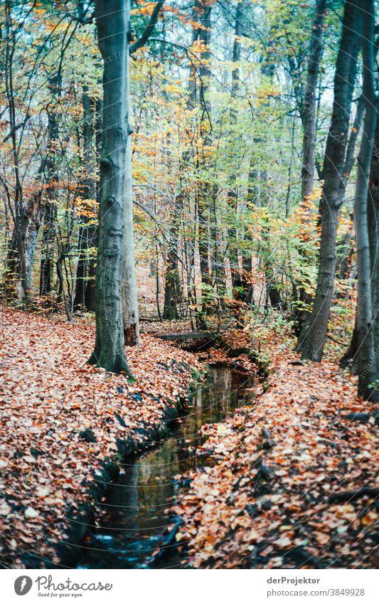 Bachlauf in Brandenburg Landschaft Ausflug Natur Umwelt wandern Sightseeing Pflanze Herbst Schönes Wetter Baum Wald Akzeptanz Vertrauen Glaube Herbstlaub