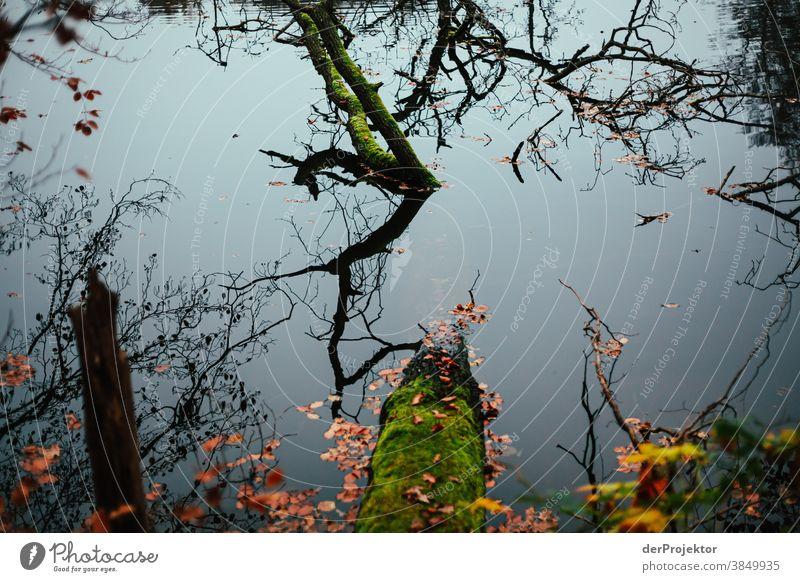 Baumstamm in See in Brandenburg Landschaft Ausflug Natur Umwelt wandern Sightseeing Pflanze Herbst Schönes Wetter Wald Akzeptanz Vertrauen Glaube Herbstlaub