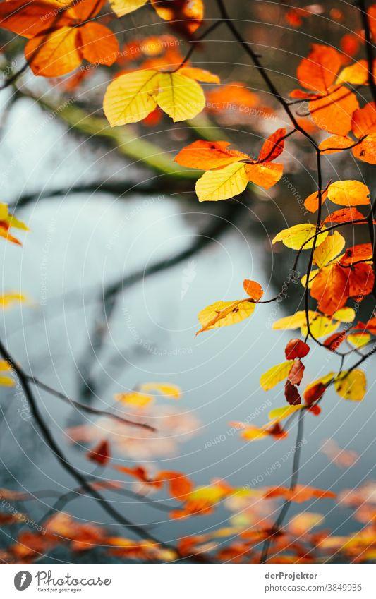 Laub mit See im Hintergrund  in Brandenburg Landschaft Ausflug Natur Umwelt wandern Sightseeing Pflanze Herbst Schönes Wetter Baum Wald Akzeptanz Vertrauen