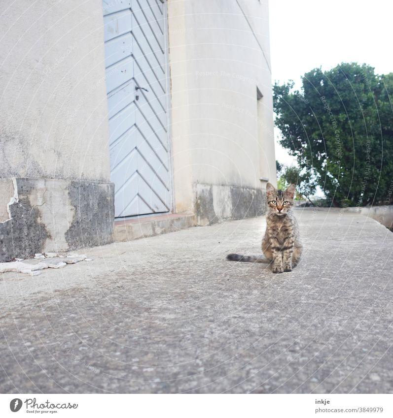 Straßenkatze auf Korsika Farbfoto Außenaufnahme Katze freilebend hocken sitzen Menschenleer niedlich Jung klein Hauswand Herumtreiben Tier Tierporträt
