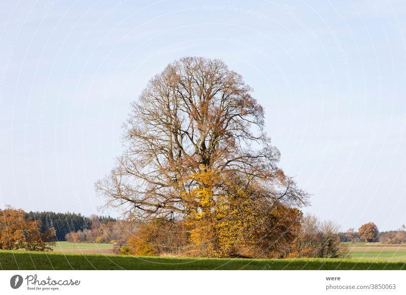Baum im Herbst Färbung auf einer Wiese Herbstfarbe Herbstwald Herbstlaub Niederlassungen farbenfroh Textfreiraum Wald Landschaft Natur niemand malerisch Bäume