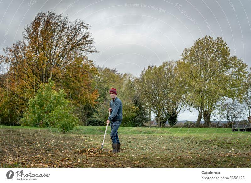 Laubrechen im Herbst auf der Wiese Natur Jahreszeit Bäume Blätter Herbstlaub Person Mann Pflanze Herbstfärbung Herbstbeginn Vergänglichkeit Herbstwetter
