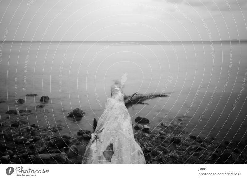 Ein umgefallener Baumstamm im Meer - nebeliger Schleier liegt über dem Wasser Ostsee Ostseeküste Küste Steine Steilküste Strand Steinstrand Nebel Nebelmeer Fels