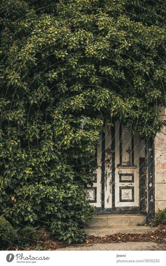 Alte mit Efeu eingewachsene Tür aus Holz - davor Laub an den Treppenstufen - alles ganz verlassen und trostlos - aber trotzdem irgendwie zauberhaft alt Holztür