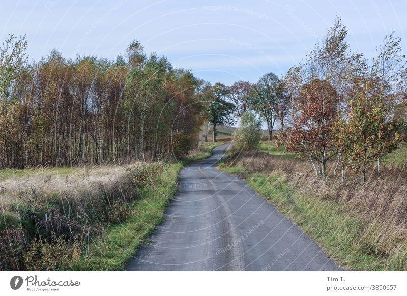 eine kleine Straße in Polen . Es ist Herbst ... poland autumn Wege & Pfade Blatt Baum Außenaufnahme Wald Menschenleer Farbfoto Umwelt herbstlich Herbstfärbung