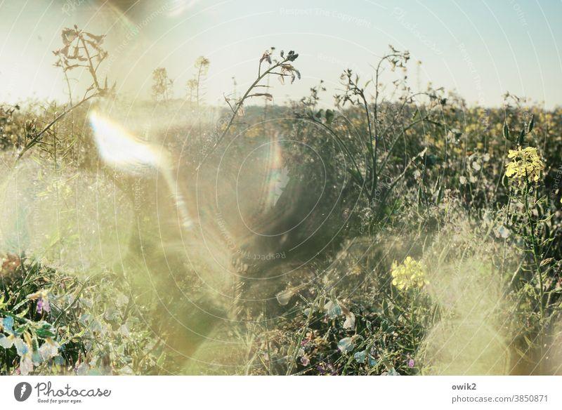 Flimmerkiste Landwirtschaft Ackerbau Feld Nutzpflanze Wachstum schaukeln ruhig leuchten geduldig Wetter Lebensfreude glänzend Klima Umwelt Natur Licht Schatten