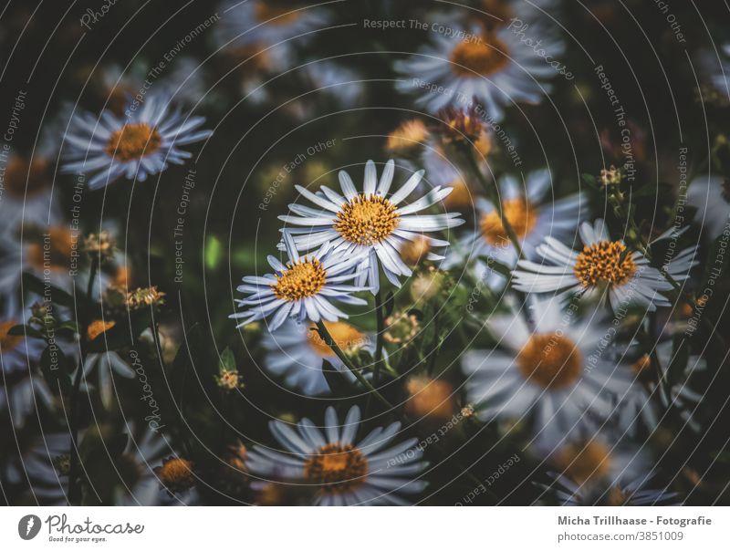 Blumen in der Abendsonne Blüten Blütenblätter Blütenmeer Blätter Stiele Stengel Dämmerung Morgen Pflanze Natur Nahaufnahme Makroaufnahme leuchten strahlen