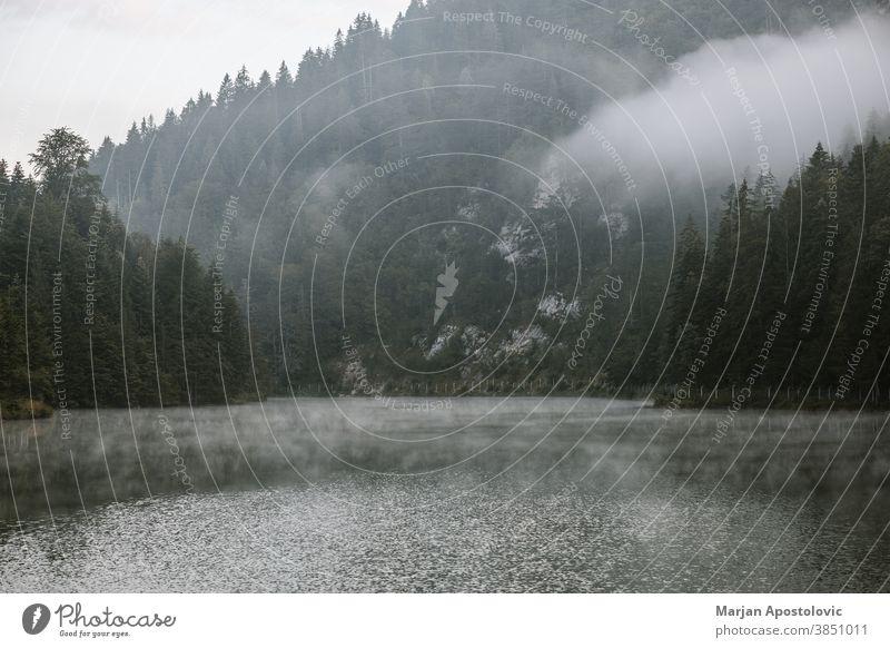 Nebliger Frühmorgen auf dem Bergsee Abenteuer Herbst schön Schönheit Wolken Landkreis Morgendämmerung entdecken früh Immergrün erkunden Nebel neblig Wald Dunst