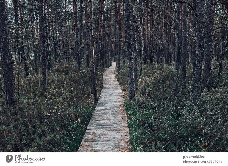 Holzpfad, der durch den Sumpf und Wald in einem Naturpark führt Tag Wälder Baum erkunden Laubwerk Umwelt im Freien Weg reisen grün Hintergrund natürlich
