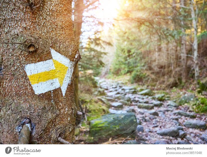 Wanderwegmarkierung an einem Baum im Bergwald. Nachlauf Markierung Wanderung Wald Berge u. Gebirge Polen Natur Weg Regie Abenteuer Zeichen im Freien