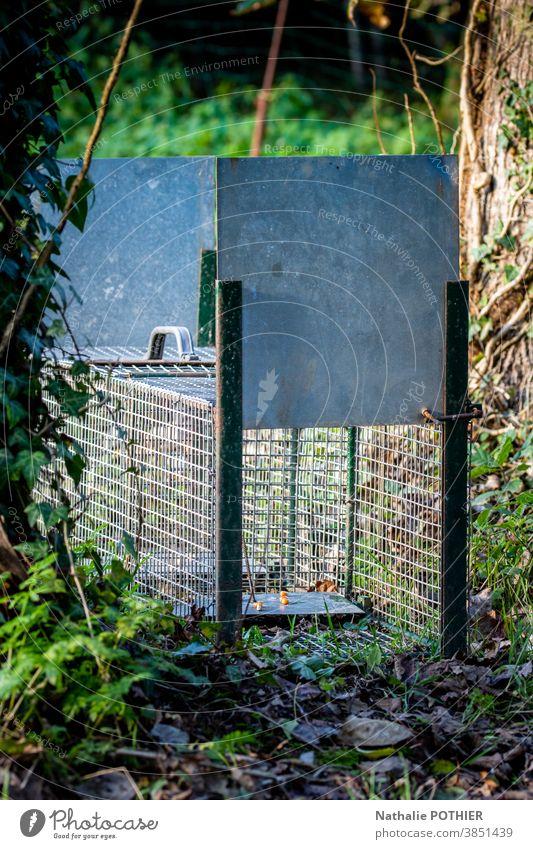 Schädlingsfalle in der Natur Tier Garten Außenaufnahme Falle fangen Käfig Köder Ratte vernichten Schaden Tiere Metall