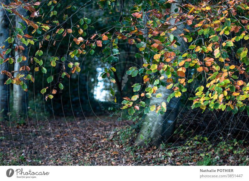 Pfad im Wald im Herbst Weg Natur Landschaft im Freien Saison Laubwerk fallen Park farbenfroh Blatt Blätter Baum